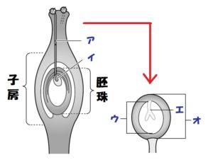 植物の受精
