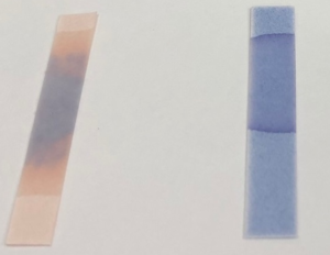 リトマス紙が青→赤