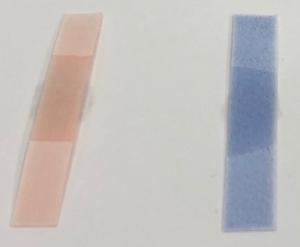 リトマス紙の色の変化なし