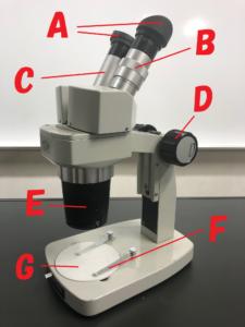 双眼実態顕微鏡の名前
