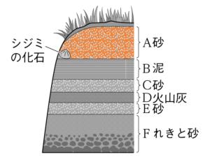 しじみの化石が含まれる地層