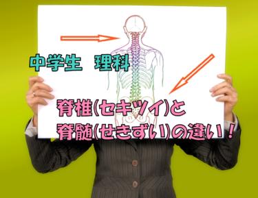 脊椎と脊髄の違い