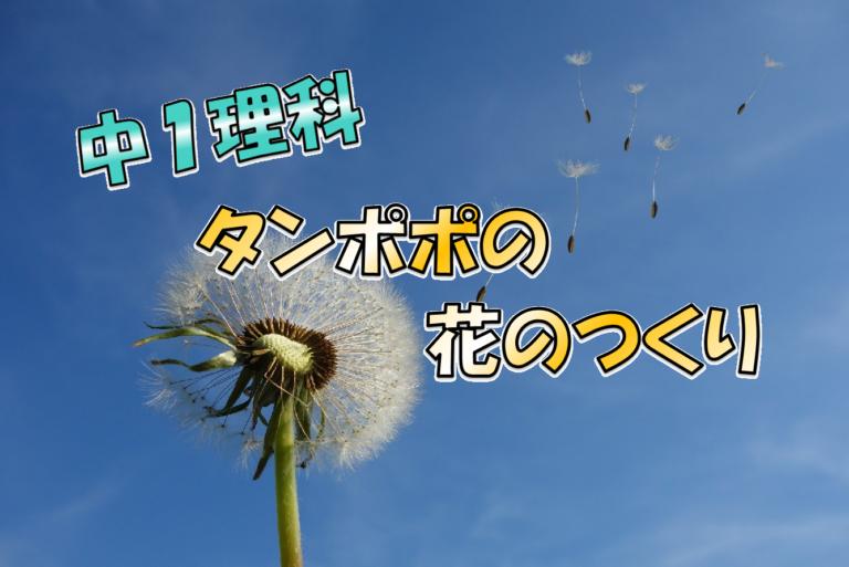 タンポポの花のつくり