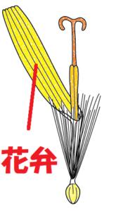 タンポポの花弁のイラスト