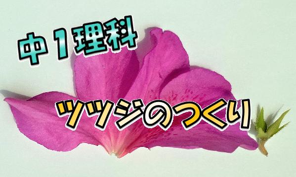 ツツジの花のつくり