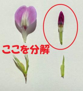 花の中心を分解