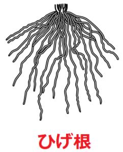 ひげ根のイラスト