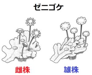 コケ 植物 特徴 コケ植物とは?中学生向けに解説