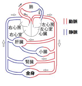 全身の血管