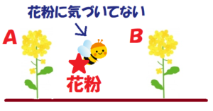 昆虫は花粉に気づかない