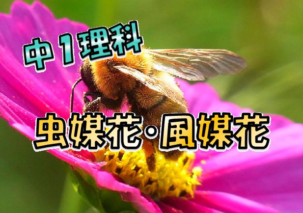 虫媒花と風媒花