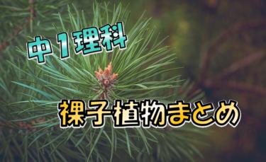 裸子植物のなかまと特徴