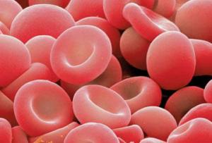 赤血球の写真