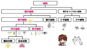 双子葉類と単子葉類の分類
