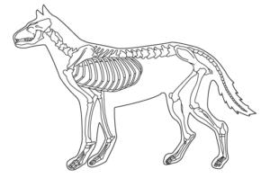 ホニュウ類の骨格