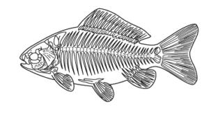 魚類の骨格