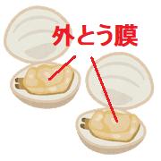 ハマグリの外套膜
